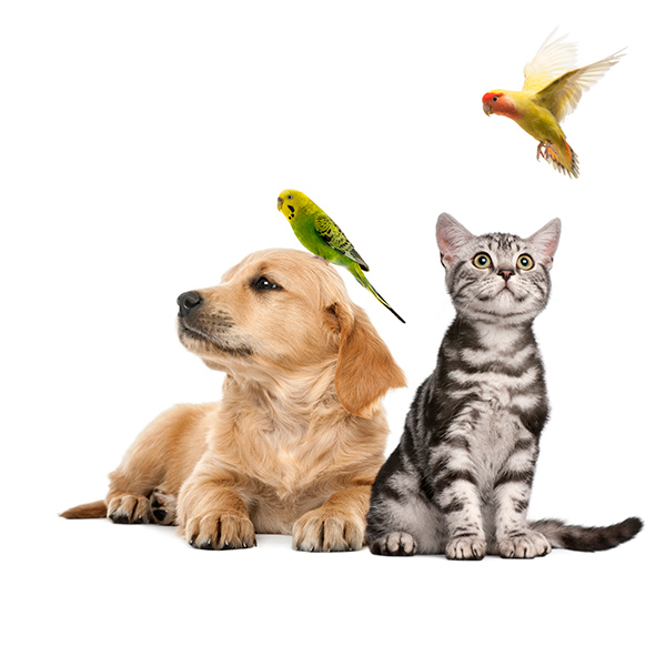 Pet Care Delivery or Pickup