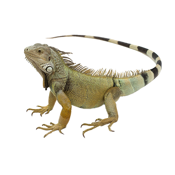 Reptile Care Delivery or Pickup