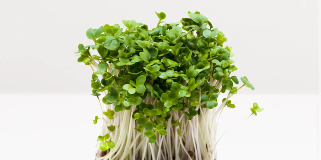 Broccoli Sprouts – All You Need to Know | Instacart Guide to Fresh Produce