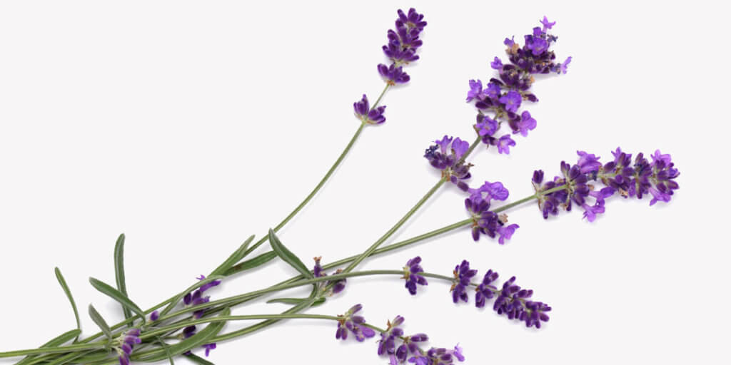 Lavender – All You Need to Know   Instacart Guide to Fresh Produce