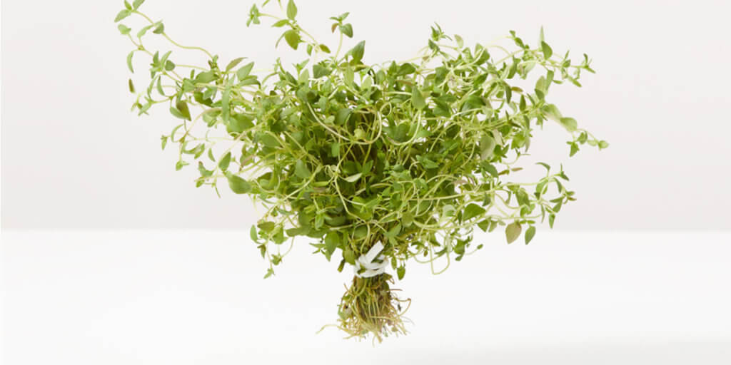 Thyme – All You Need to Know | Instacart Guide to Fresh Produce