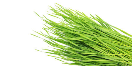 Wheatgrass – All You Need to Know   Instacart Guide to Fresh Produce