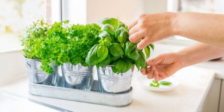 How to Care for a Basil Plant from the Grocery Store